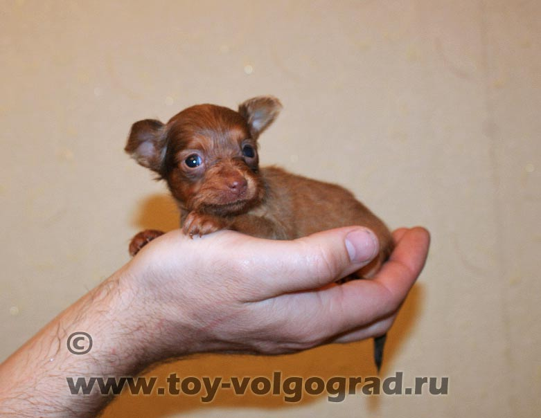 Русская девушка в крошечной мини юбке 21 фотография