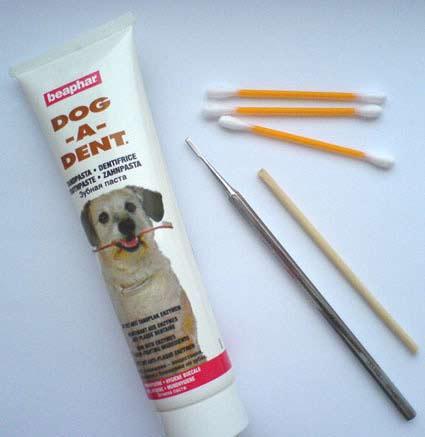 Чем почистить зубы той терьеру в домашних условиях 750